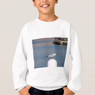Black-headed gull perched on post calling sweatshirt