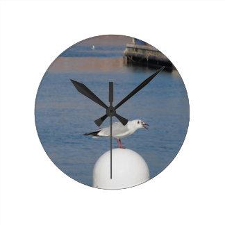 Black-headed gull perched on post calling wallclock
