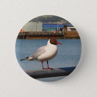 Black-headed gull, Scotland 2 Inch Round Button