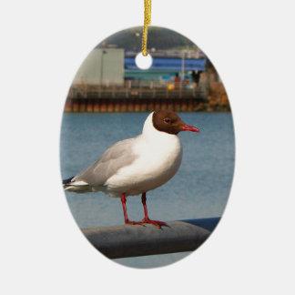 Black-headed gull, Scotland Ceramic Ornament