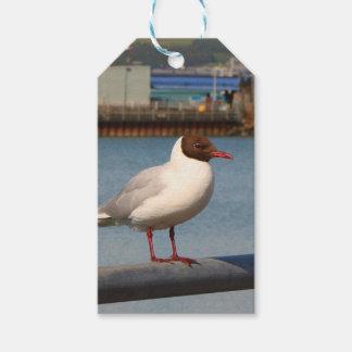 Black-headed gull, Scotland Gift Tags
