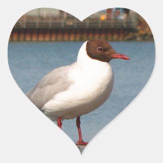 Black-headed gull, Scotland Heart Sticker
