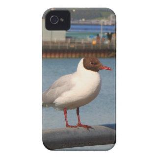 Black-headed gull, Scotland iPhone 4 Case