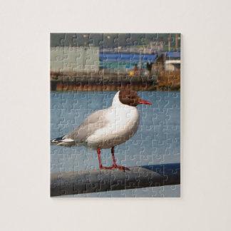 Black-headed gull, Scotland Jigsaw Puzzle