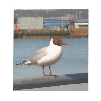 Black-headed gull, Scotland Notepad