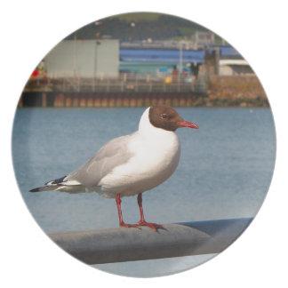 Black-headed gull, Scotland Plate