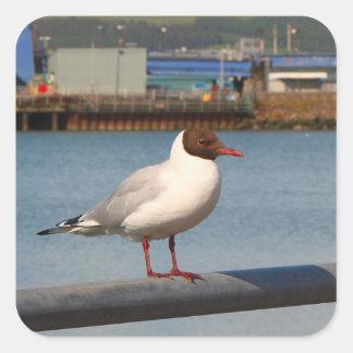 Black-headed gull, Scotland Square Sticker