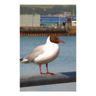 Black-headed gull, Scotland Stationery