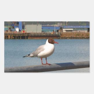 Black-headed gull, Scotland Sticker