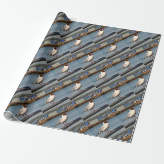 Black-headed gull, Scotland Wrapping Paper
