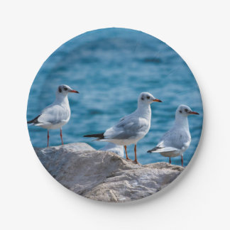 Black-headed gulls, chroicocephalus ridibundus 7 inch paper plate