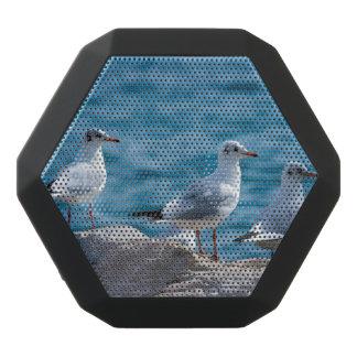 Black-headed gulls, chroicocephalus ridibundus black bluetooth speaker