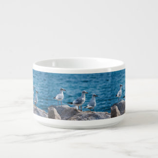 Black-headed gulls, chroicocephalus ridibundus bowl