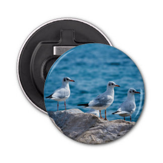 Black-headed gulls, chroicocephalus ridibundus button bottle opener