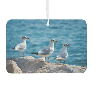 Black-headed gulls, chroicocephalus ridibundus car air freshener