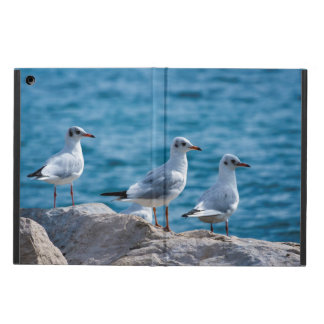 Black-headed gulls, chroicocephalus ridibundus case for iPad air