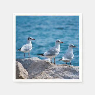 Black-headed gulls, chroicocephalus ridibundus disposable napkins