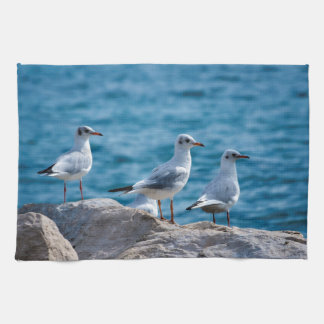 Black-headed gulls, chroicocephalus ridibundus hand towel