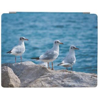 Black-headed gulls, chroicocephalus ridibundus iPad cover