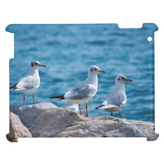 Black-headed gulls, chroicocephalus ridibundus iPad covers