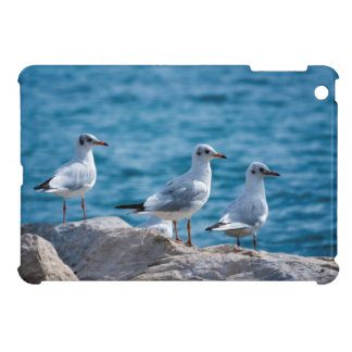 Black-headed gulls, chroicocephalus ridibundus iPad mini covers