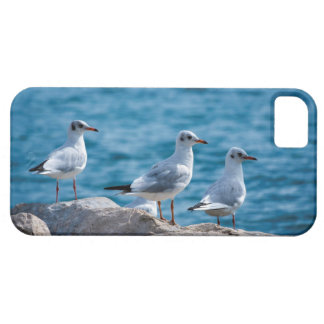 Black-headed gulls, chroicocephalus ridibundus iPhone 5 covers