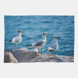 Black-headed gulls, chroicocephalus ridibundus kitchen towel