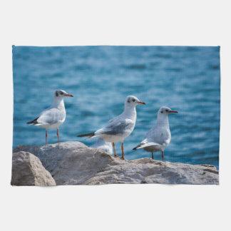 Black-headed gulls, chroicocephalus ridibundus kitchen towel