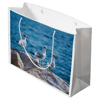 Black-headed gulls, chroicocephalus ridibundus large gift bag