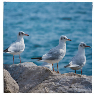 Black-headed gulls, chroicocephalus ridibundus napkins