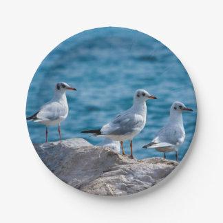 Black-headed gulls, chroicocephalus ridibundus paper plate