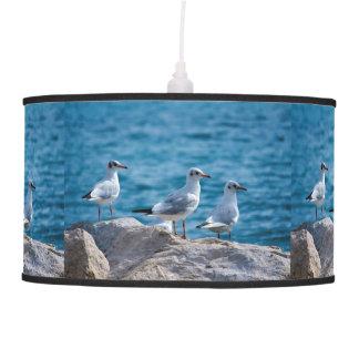 Black-headed gulls, chroicocephalus ridibundus pendant lamp