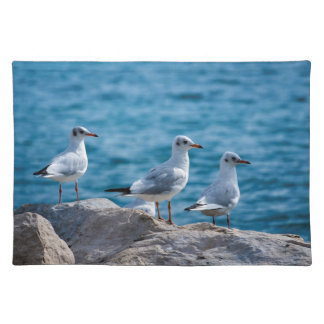 Black-headed gulls, chroicocephalus ridibundus placemat