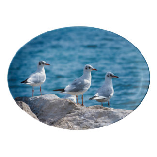 Black-headed gulls, chroicocephalus ridibundus porcelain serving platter