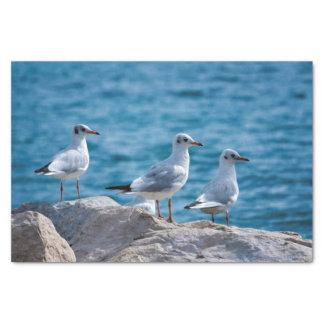 Black-headed gulls, chroicocephalus ridibundus tissue paper
