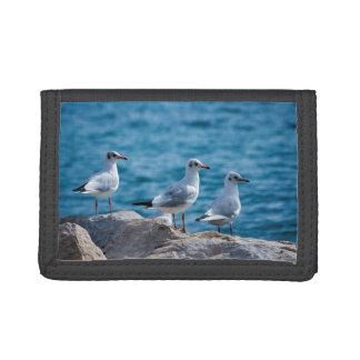 Black-headed gulls, chroicocephalus ridibundus tri-fold wallets
