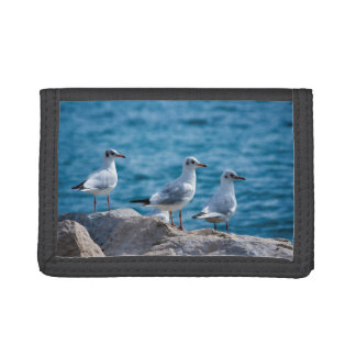 Black-headed gulls, chroicocephalus ridibundus trifold wallets