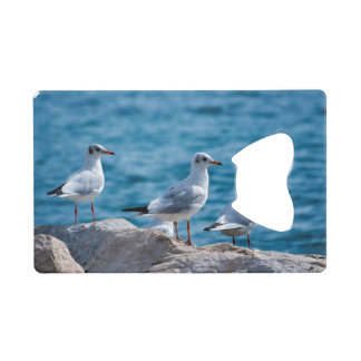 Black-headed gulls, chroicocephalus ridibundus wallet bottle opener