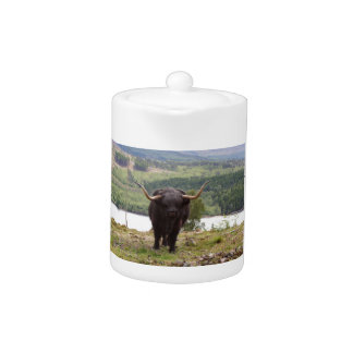 Black Highland cattle, Scotland