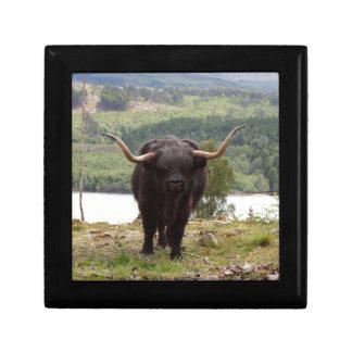 Black Highland cattle, Scotland Gift Box