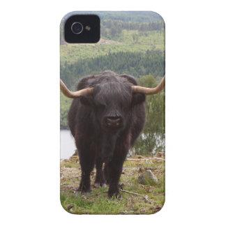 Black Highland cattle, Scotland iPhone 4 Case-Mate Case