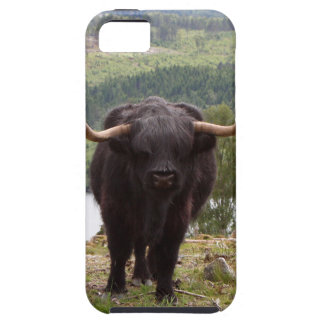 Black Highland cattle, Scotland iPhone 5 Covers