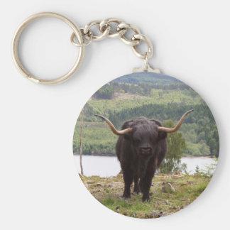 Black Highland cattle, Scotland Keychain