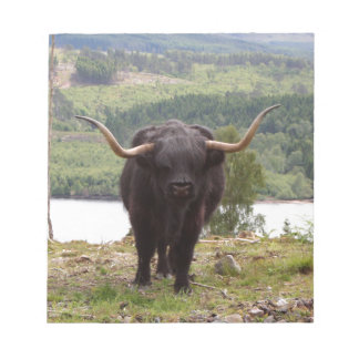 Black Highland cattle, Scotland Notepad