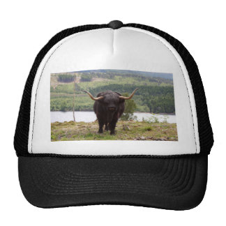 Black Highland cattle, Scotland Trucker Hat