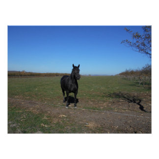 Black Horse Alone In The Pasture Poster
