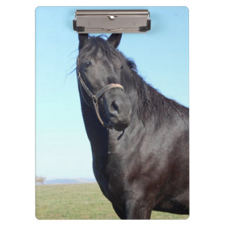 Black Horse And The Blue Sky Clipboard