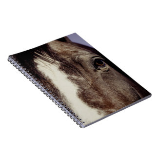 Black Horse Face with Eye Notebook