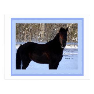 Black Horse in Snow Postcard