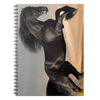 black horse on desert note book